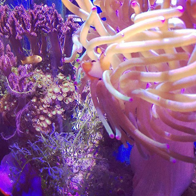Mini-reef